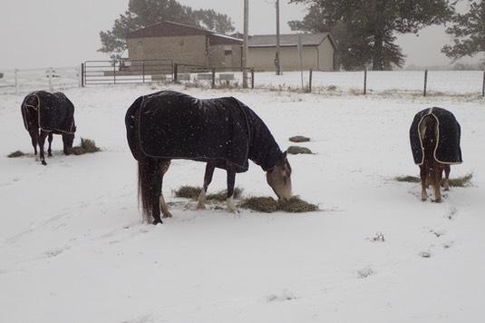 Winter Is Here 🐴 Ann S Horse Farm